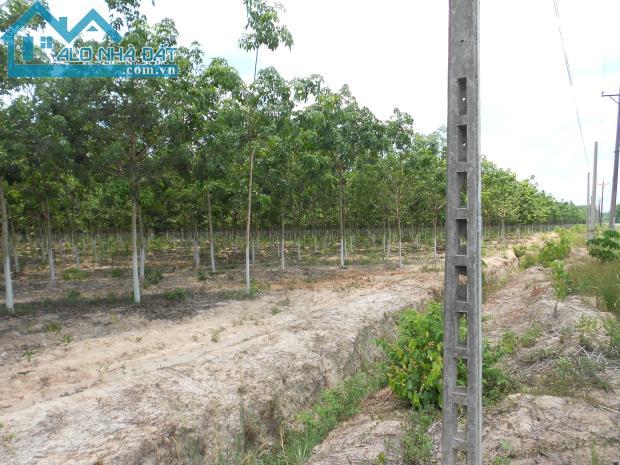 15.000m2 đất nhà xưởng Tân Uyên, đường DT742 bán 3 tỷ 700 trieu, khu công nghiệp Vsip