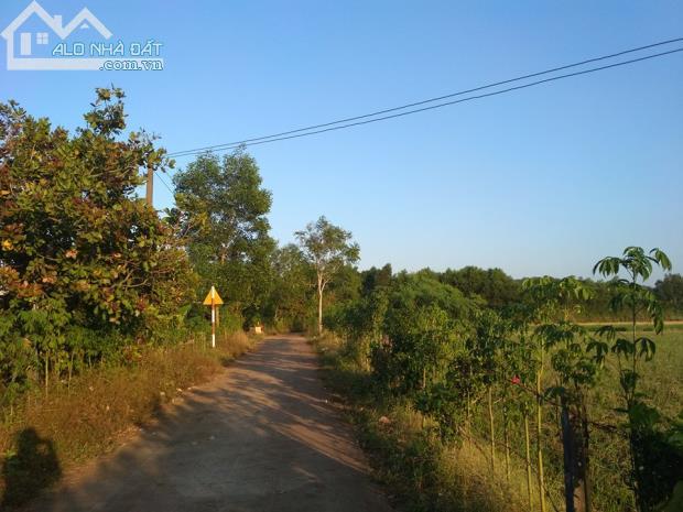 7000m2 đất trồng tràm đường bê tông thuôc xã suối cát huyện xuân lộc